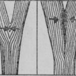 Rozłamania drzew w rozwidleniach
