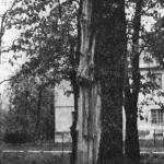 Uszkodzenia drzew przez wyładowania elektryczne