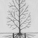 Sposoby przesadzania drzew