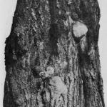 Miejsca ubytków drewna