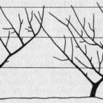 Forma sztandarowa drzew