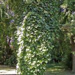 Maj w ogrodzie – Kalendarz ogrodnika