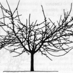 Korona kotłowa (wazowa, pucharowa)