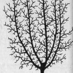 Korona pięciokonarowa - Korona stożkowa