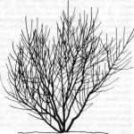 Formowanie i cięcie brzoskwini