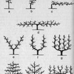 Formowanie i cięcie drzew w ogrodach przydomowych i działkowych