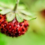 Czerwiec w ogrodzie – Kalendarz ogrodnika
