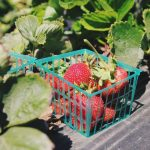 Sierpień w ogrodzie – Kalendarz ogrodnika